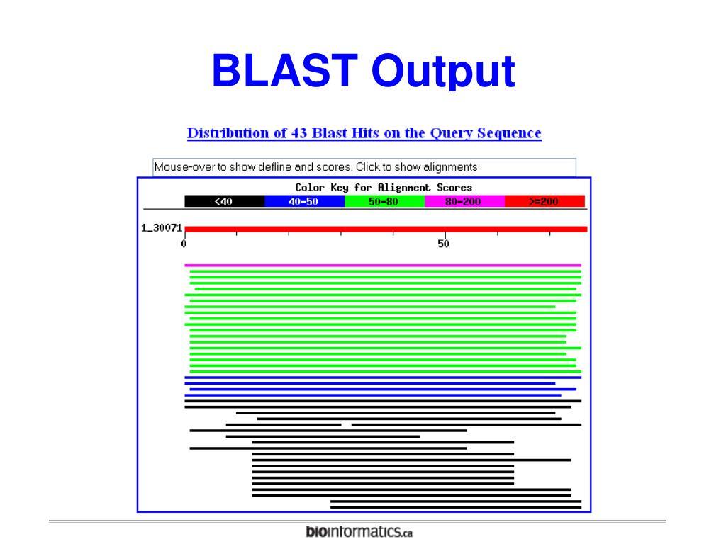 BLAST Output