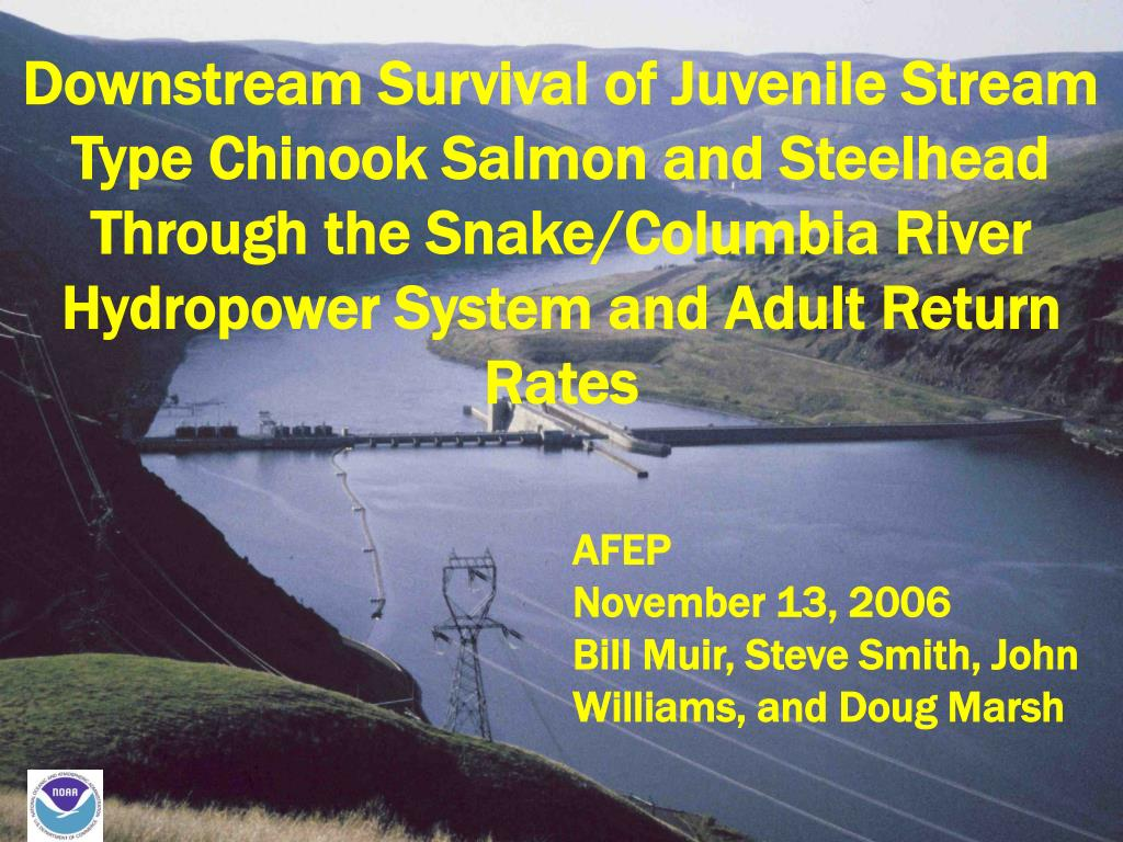 Downstream Survival of Juvenile Stream Type Chinook Salmon and Steelhead Through the Snake/Columbia River Hydropower System and Adult Return Rates