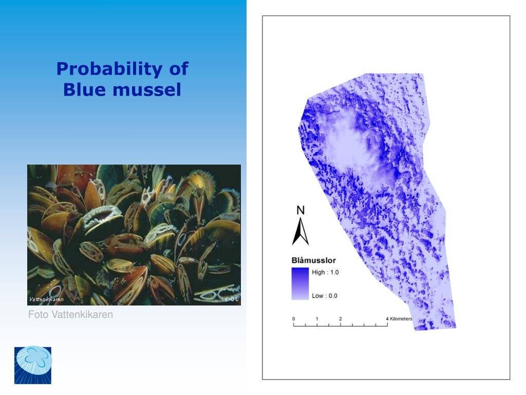 Probability of Blue mussel