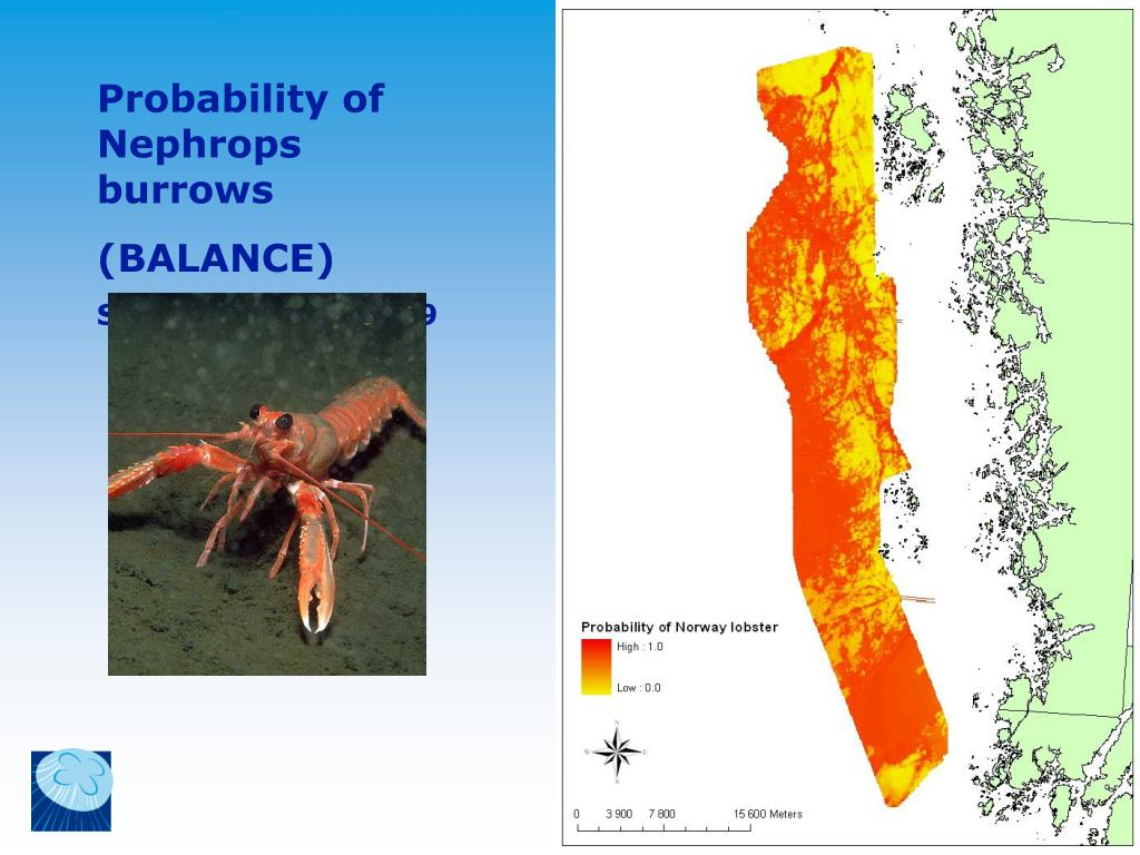 Probability of Nephrops burrows