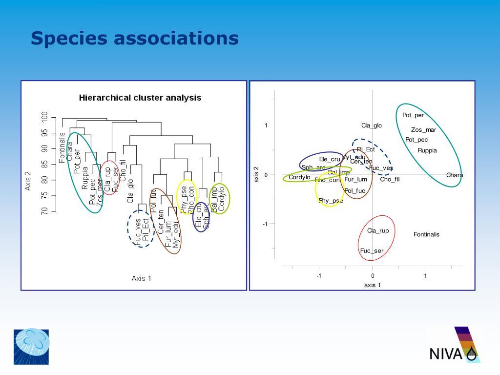 Species associations