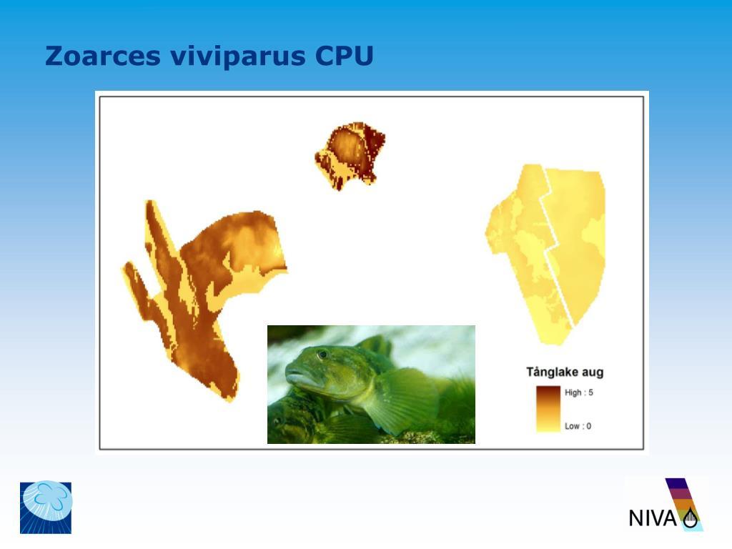 Zoarces viviparus CPU