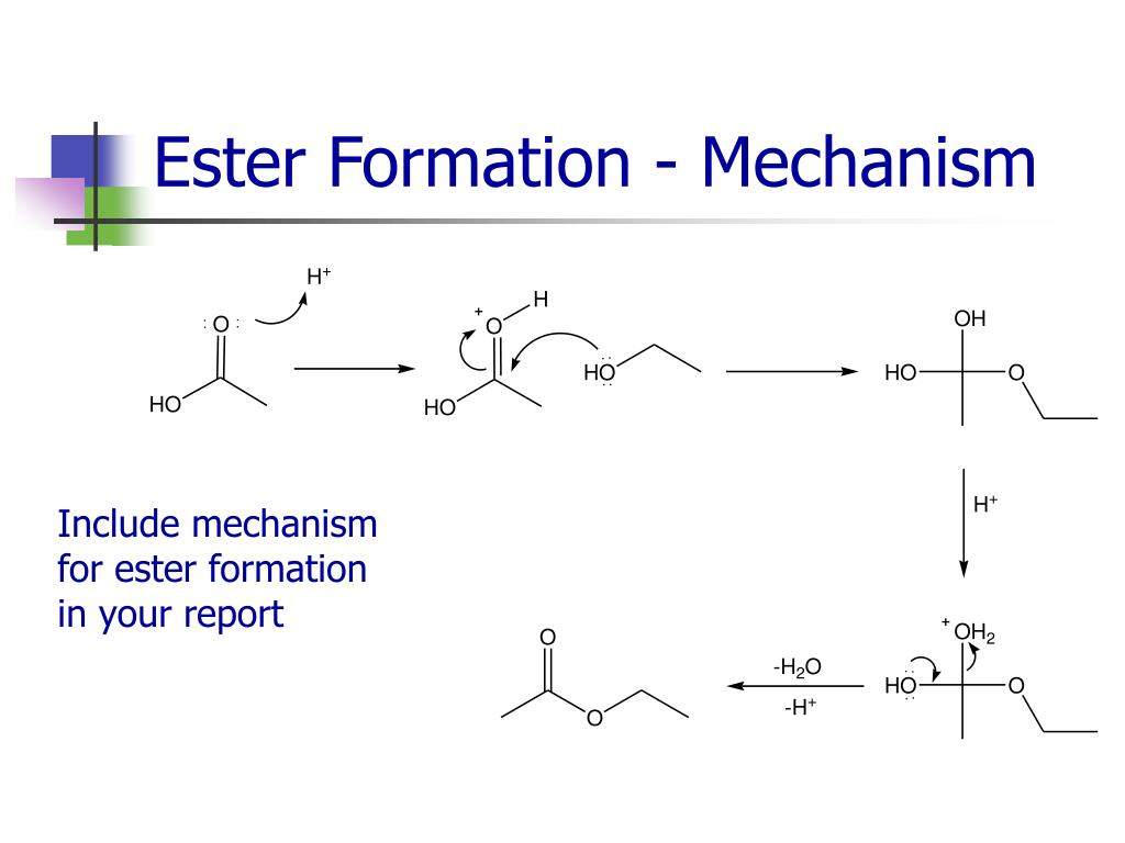 Ester Formation - Mechanism