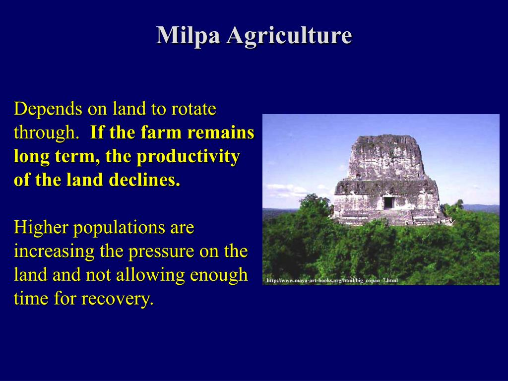 Milpa Agriculture