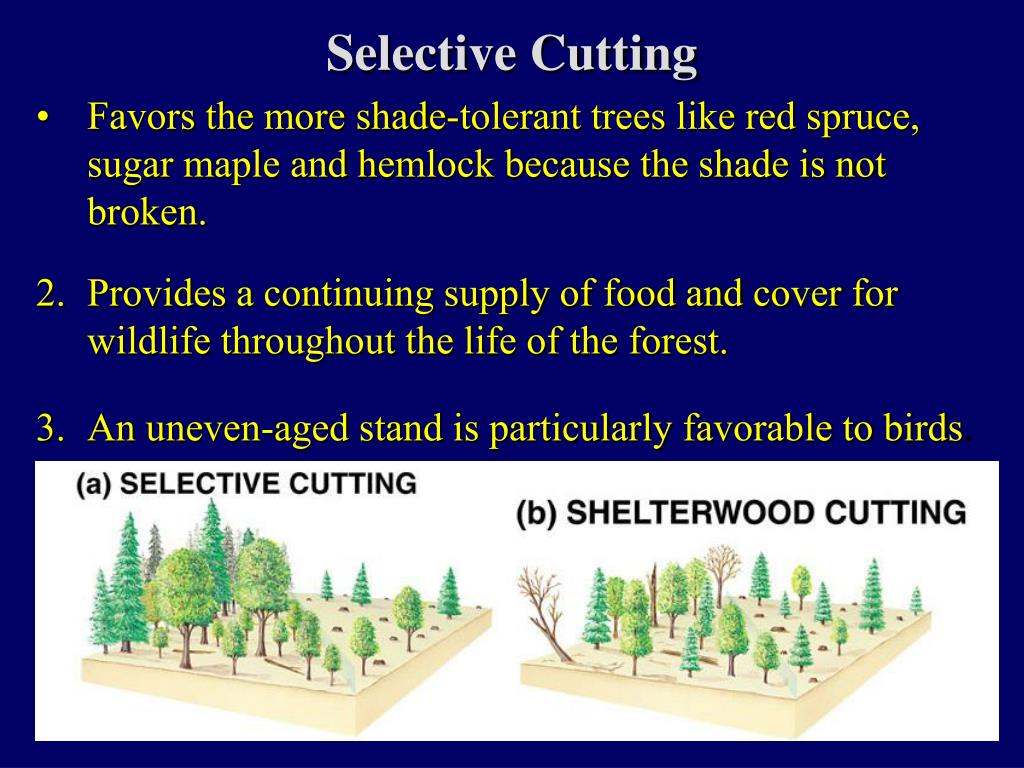 Selective Cutting