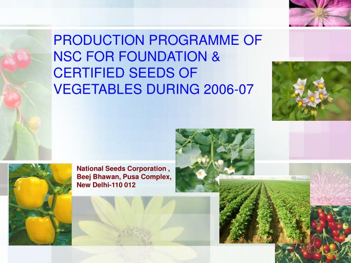 Production programme of nsc for foundation certified seeds of vegetables during 2006 07 l.jpg