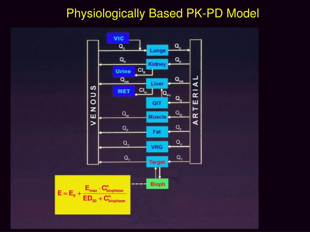 Physiologically Based PK-PD Model
