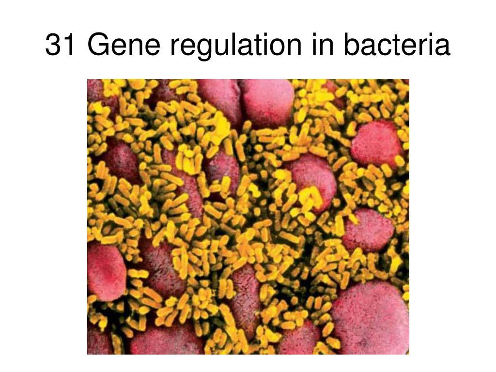 31 Gene regulation in bacteria