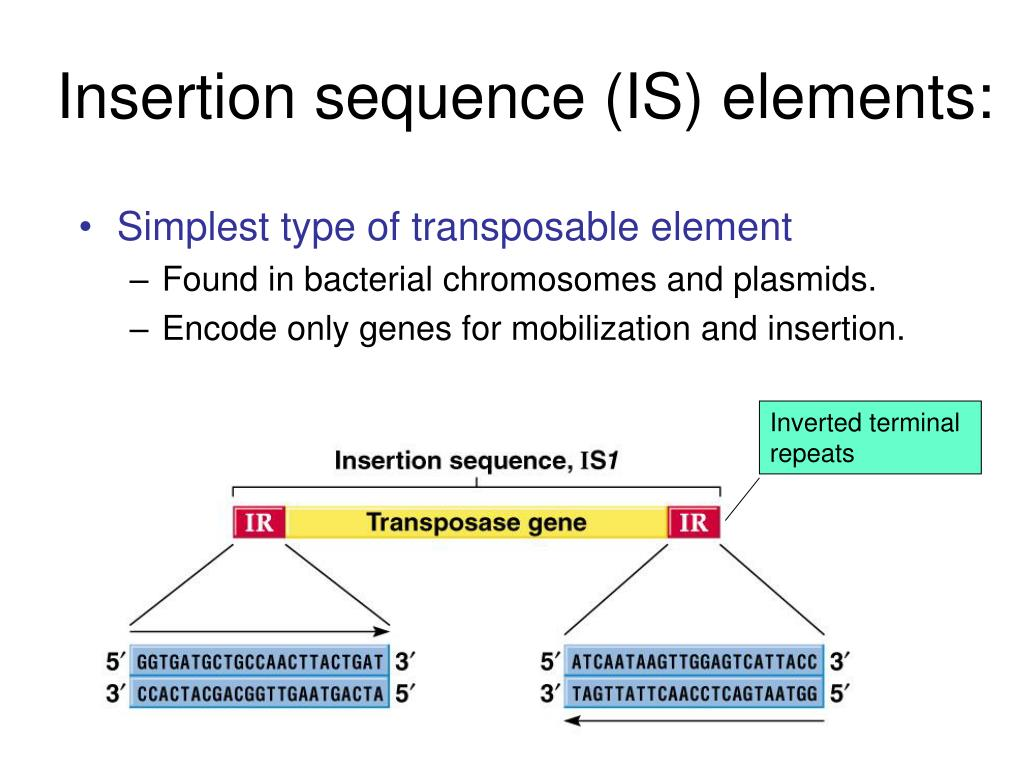 Insertion sequence (IS) elements: