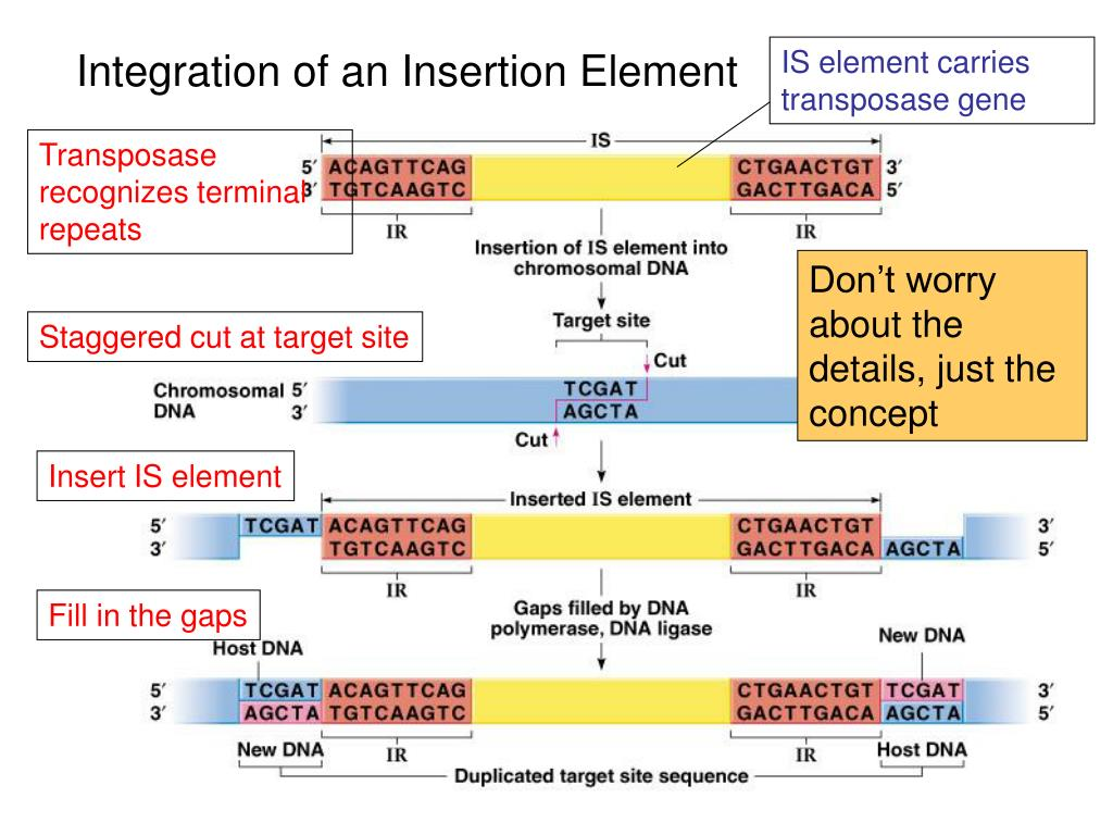 IS element carries transposase gene