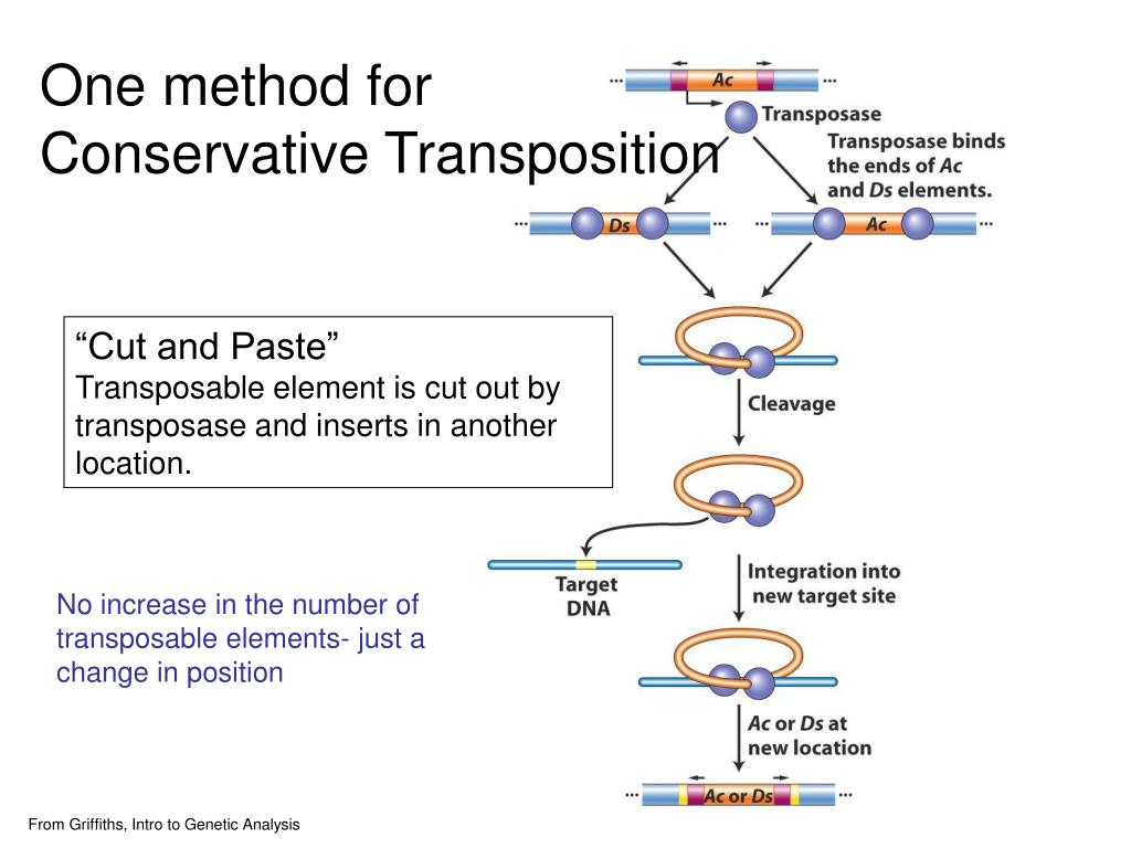 One method for Conservative Transposition