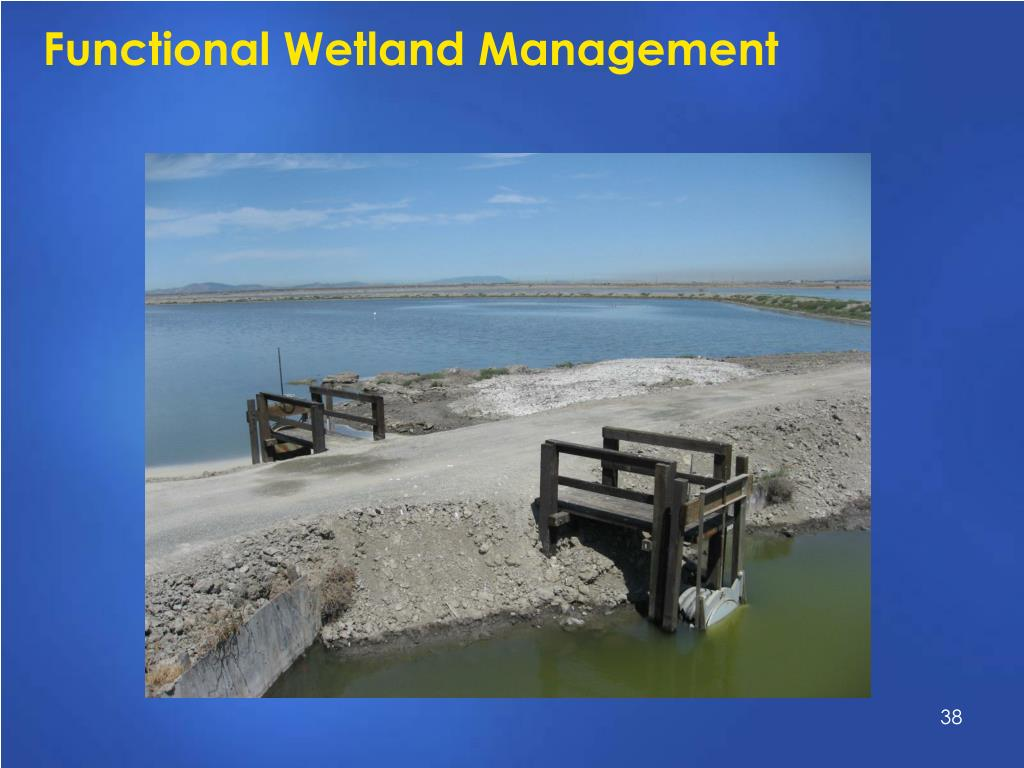 Functional Wetland Management