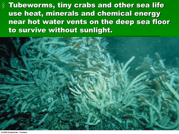 Tubeworms, tiny crabs and other sea life use heat, minerals and chemical energy near hot water vents...