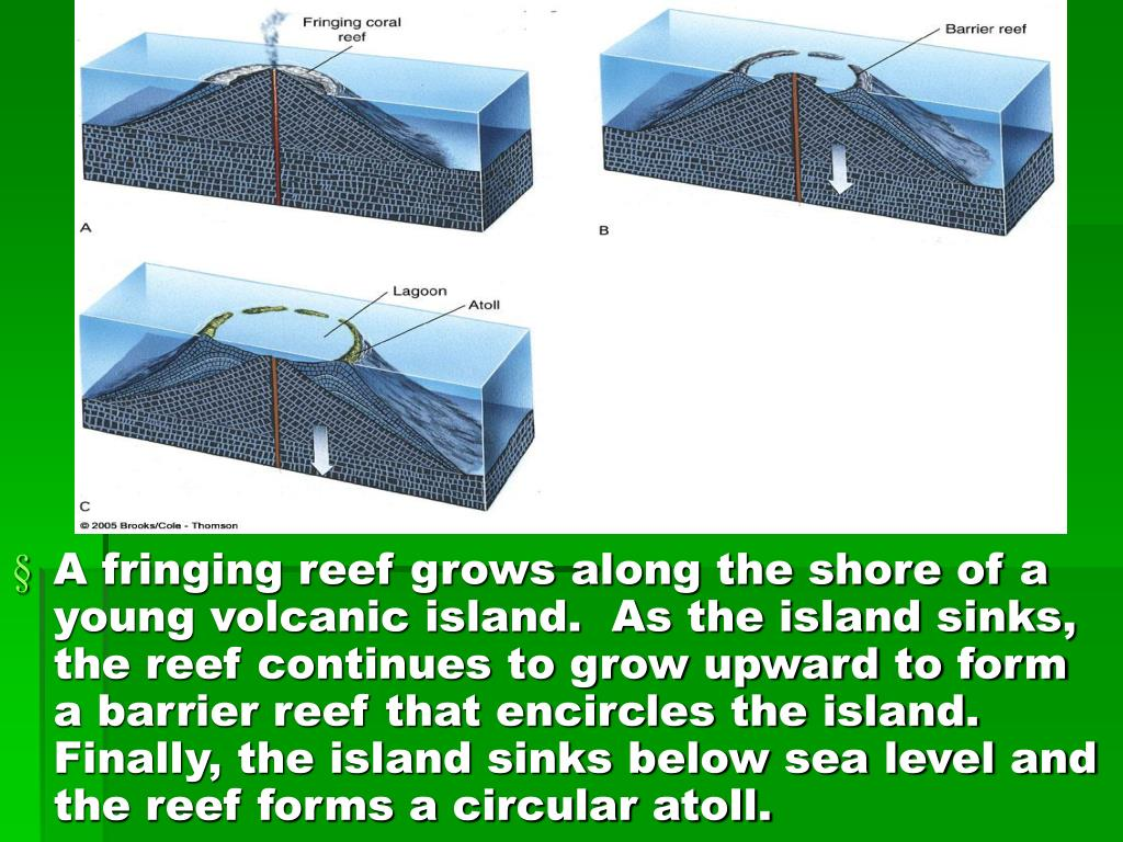 A fringing reef grows along the shore of a young volcanic island.  As the island sinks, the reef continues to grow upward to form a barrier reef that encircles the island.  Finally, the island sinks below sea level and the reef forms a circular atoll.