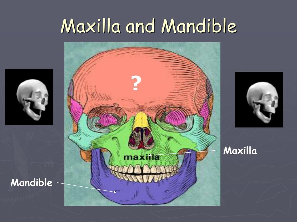 PPT - Skeletal System PowerPoint Presentation - ID:597183