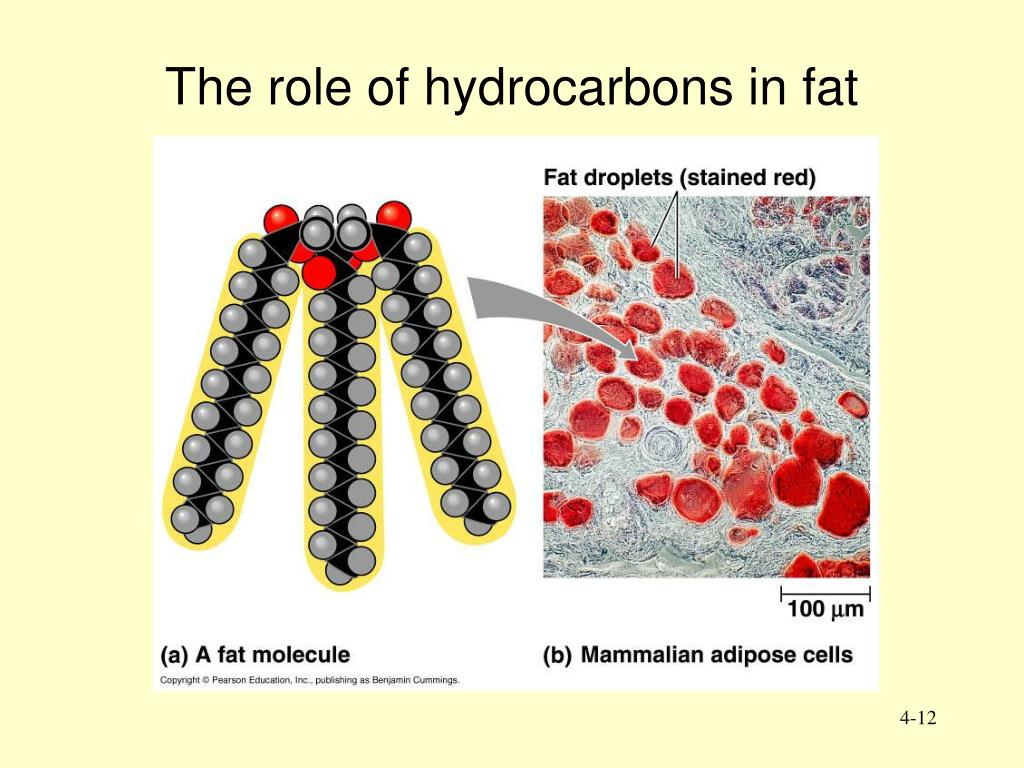 The role of hydrocarbons in fat