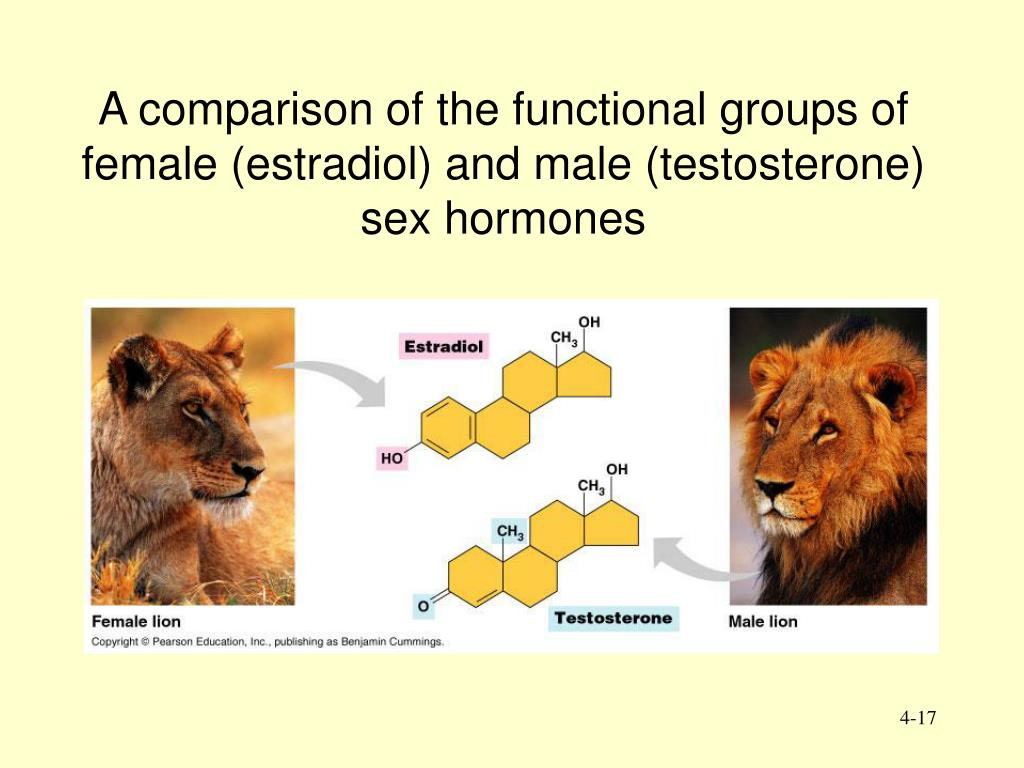 A comparison of the functional groups of female (estradiol) and male (testosterone) sex hormones