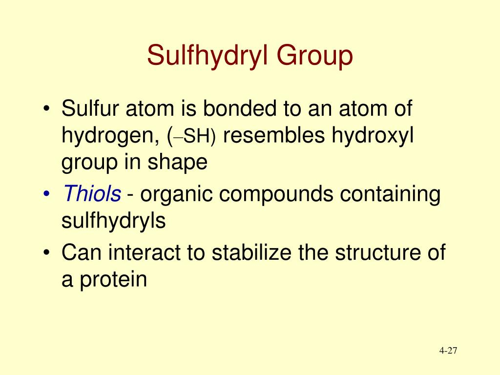 Sulfhydryl Group