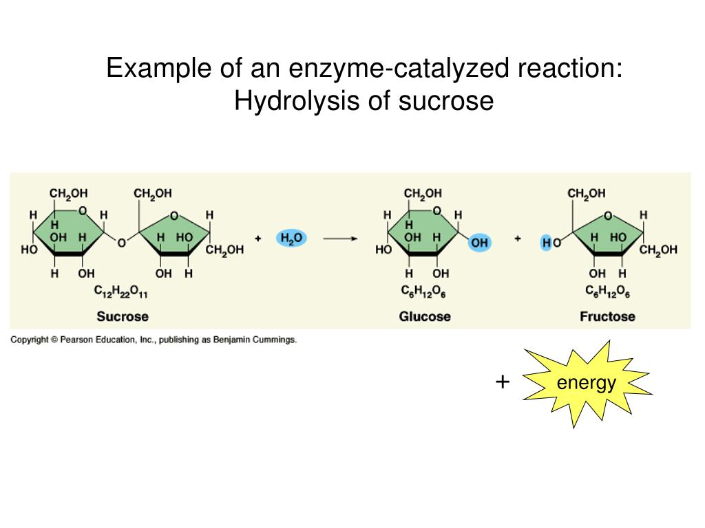 enzymes catalyze only anabolic chemical reactions