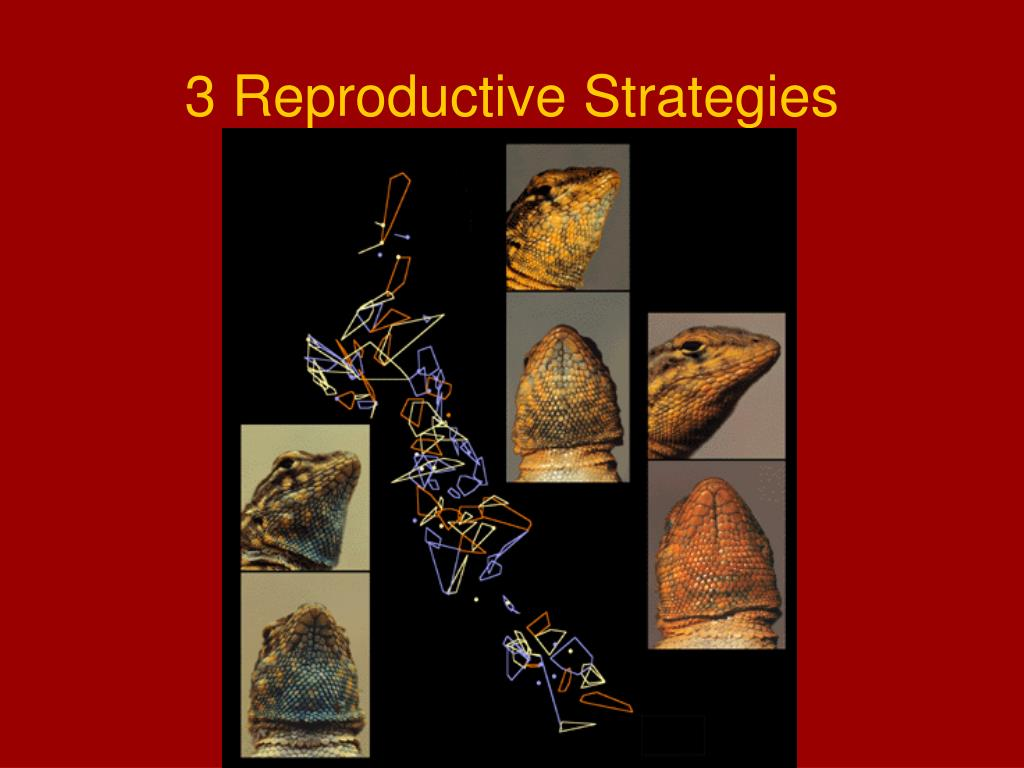 3 Reproductive Strategies