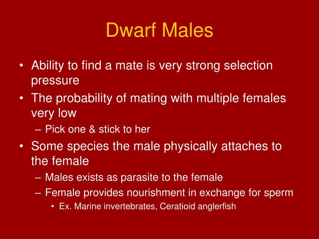 Dwarf Males