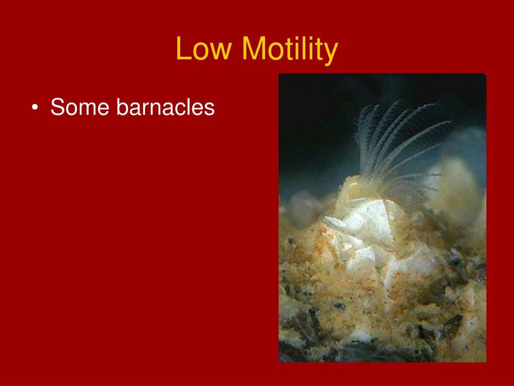 Low Motility