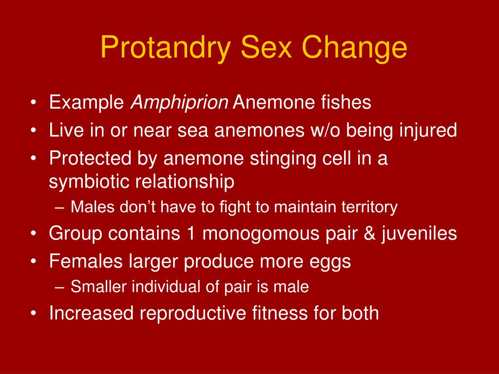 Protandry Sex Change