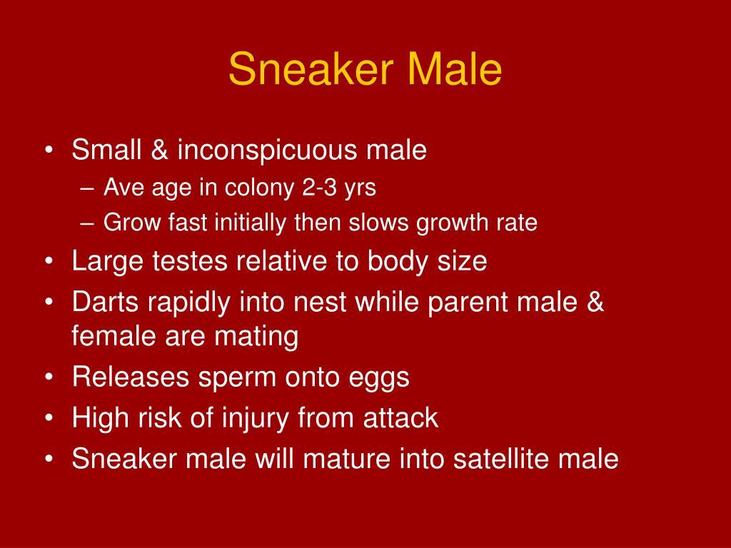 Sneaker Male