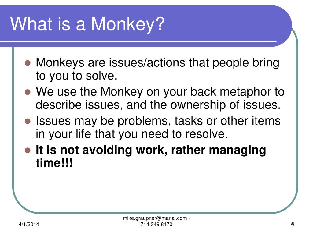 What is a Monkey?