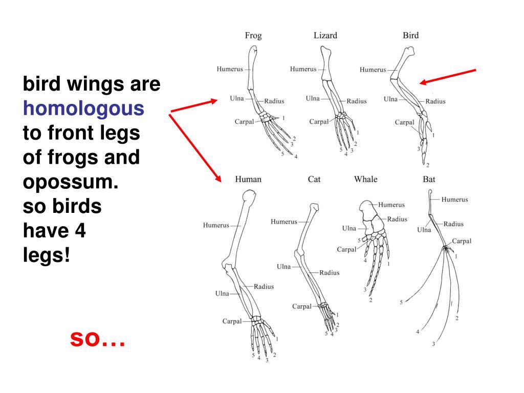 bird wings are