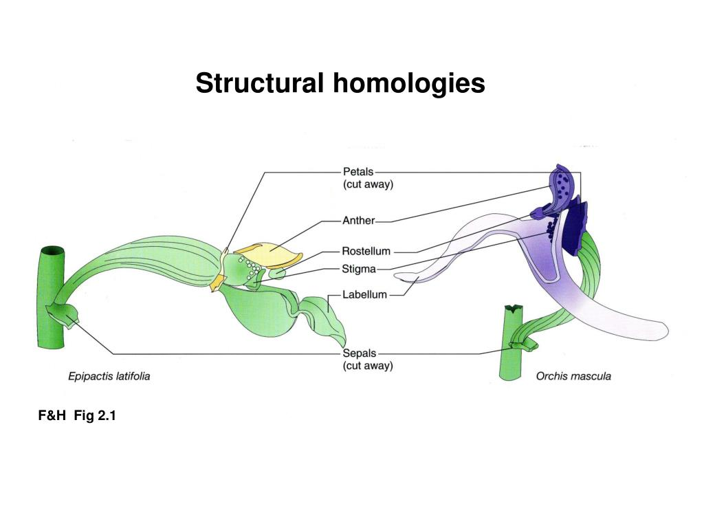 Structural homologies