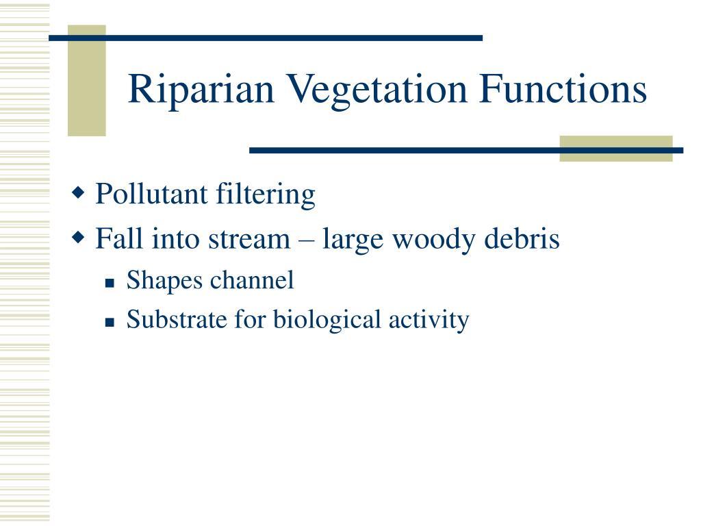 Riparian Vegetation Functions