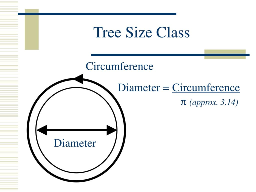 Tree Size Class