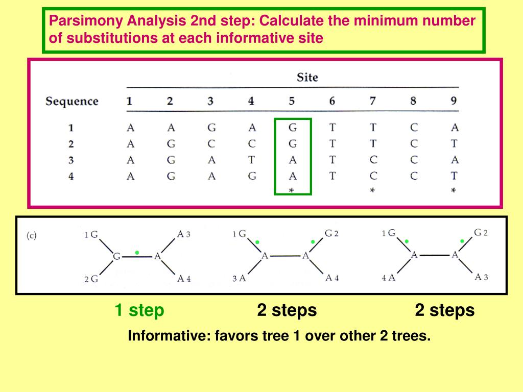 Parsimony Analysis 2nd step: Calculate the minimum number