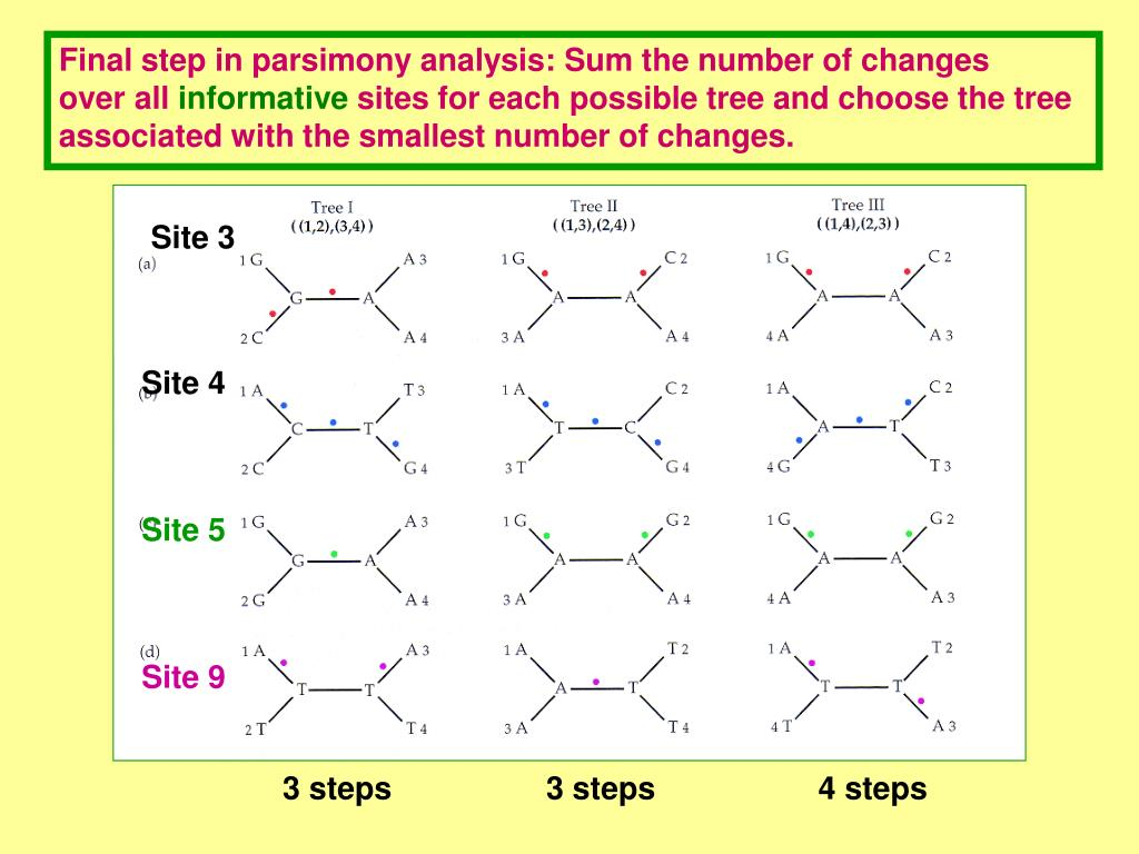 Final step in parsimony analysis: Sum the number of changes