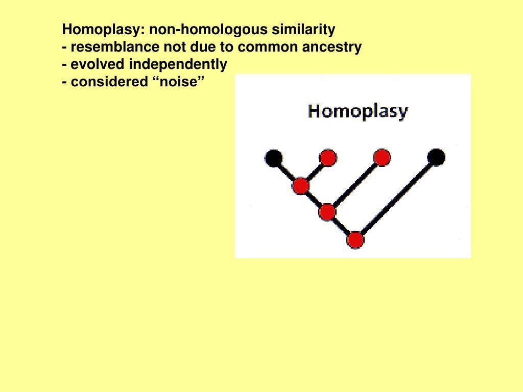 Homoplasy: non-homologous similarity