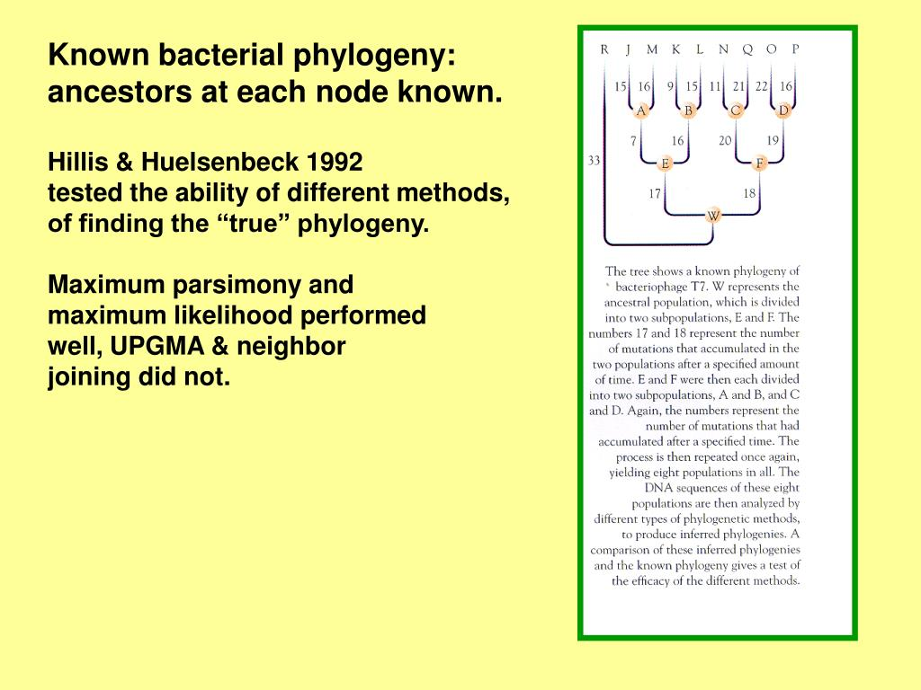 Known bacterial phylogeny: