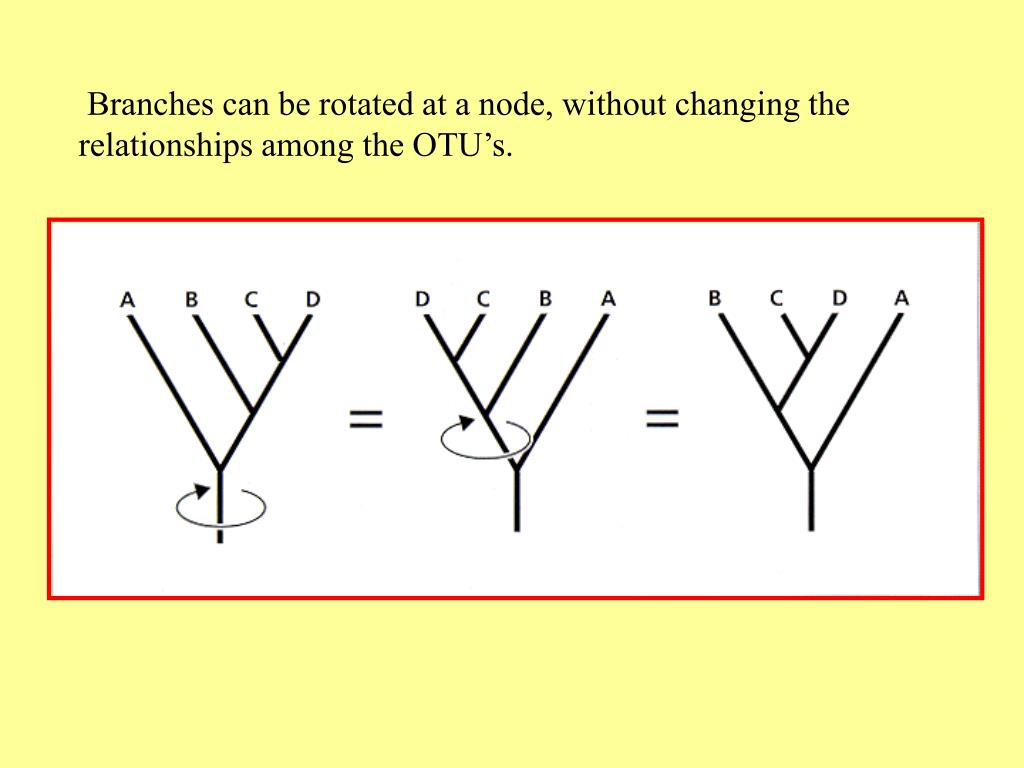 Branches can be rotated at a node, without changing the