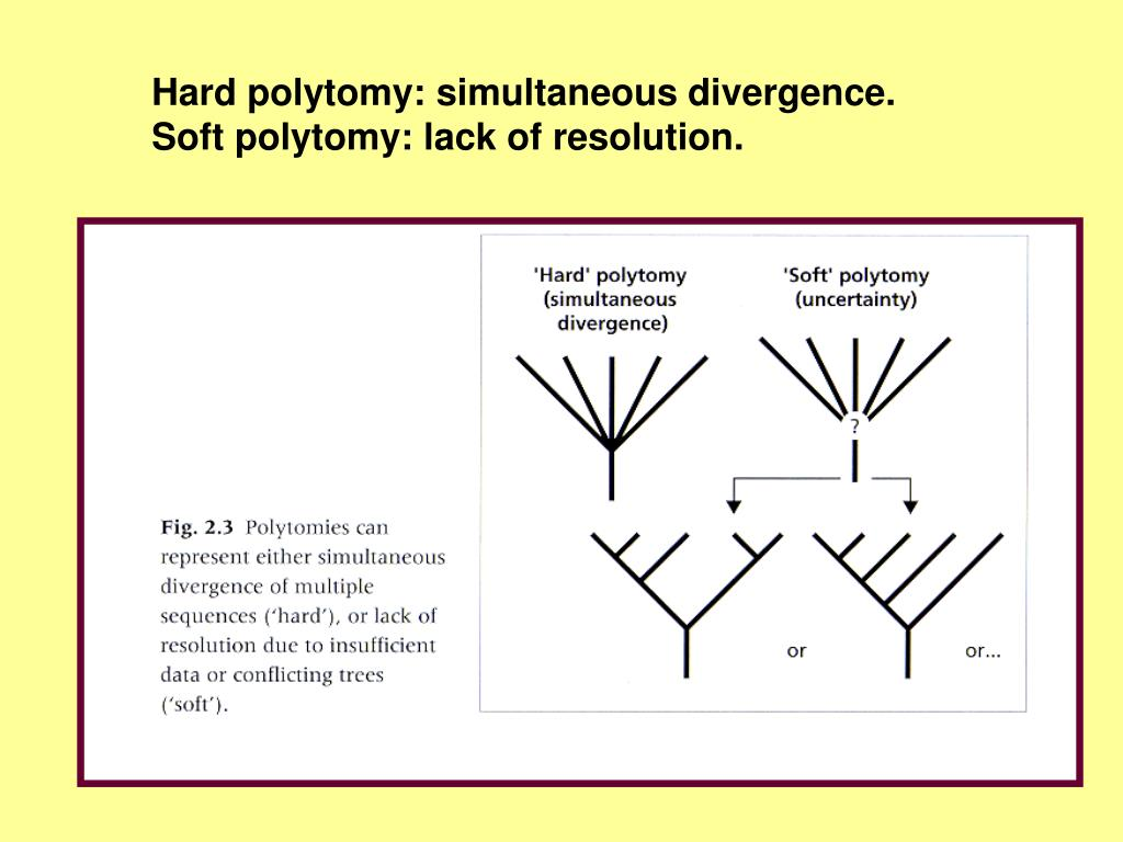 Hard polytomy: simultaneous divergence.