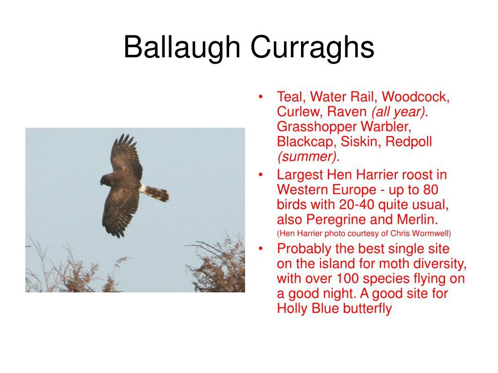 Ballaugh Curraghs