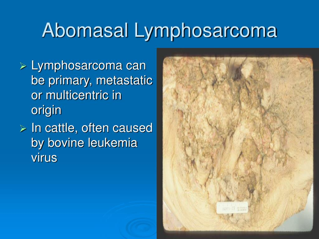 Abomasal Lymphosarcoma