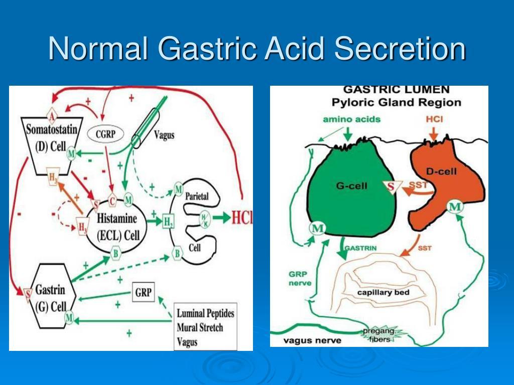 Normal Gastric Acid Secretion