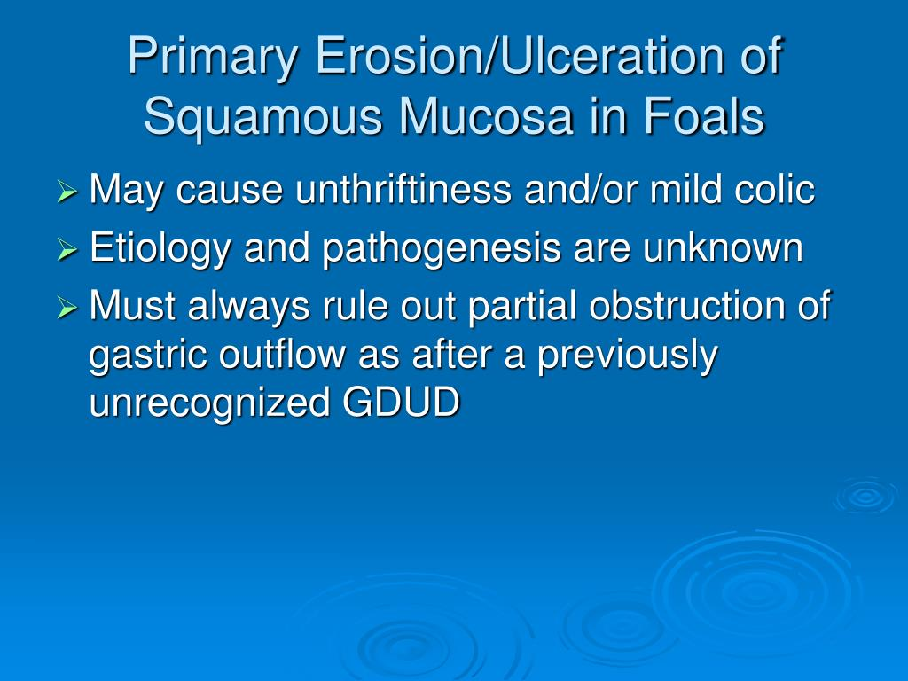 Primary Erosion/Ulceration of Squamous Mucosa in Foals