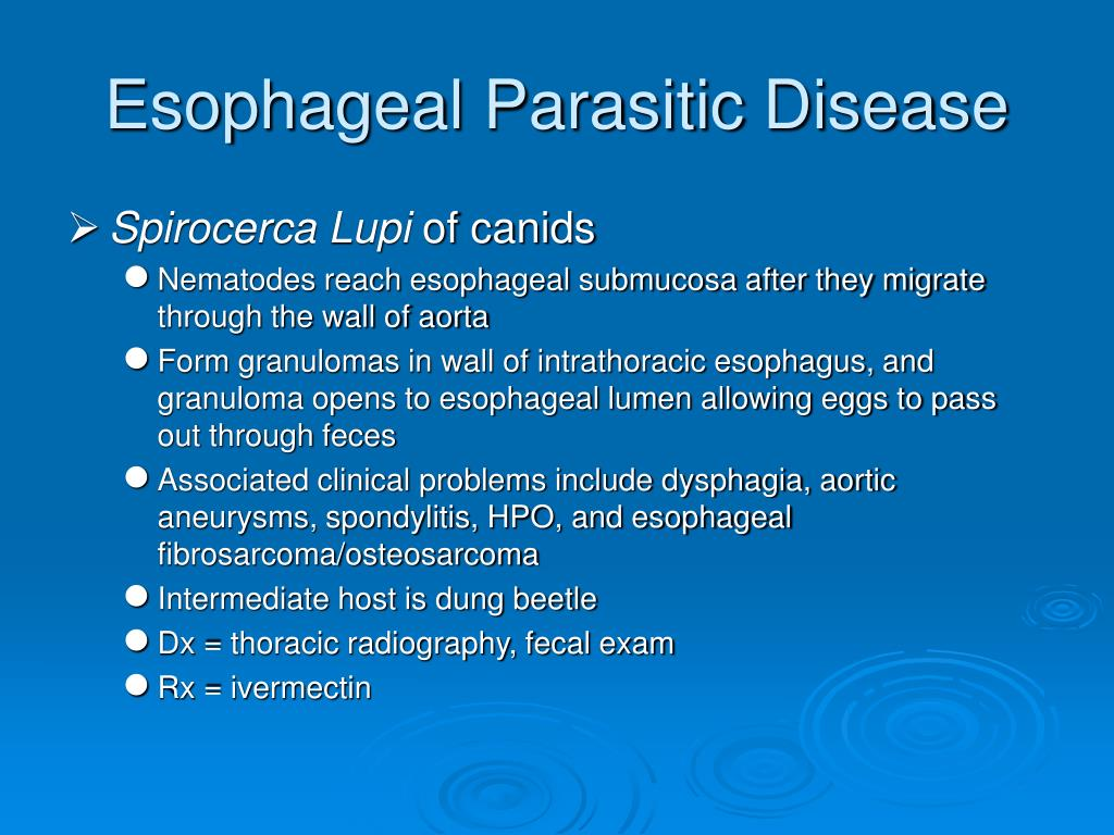 Esophageal Parasitic Disease