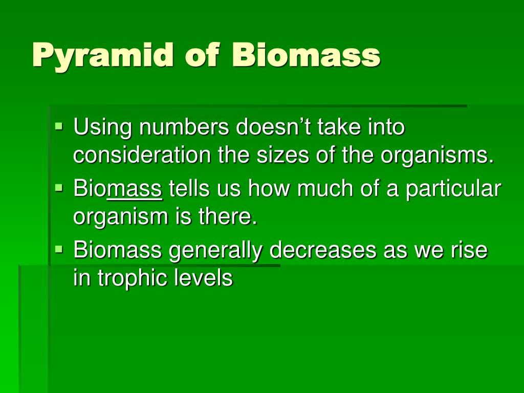Pyramid of Biomass