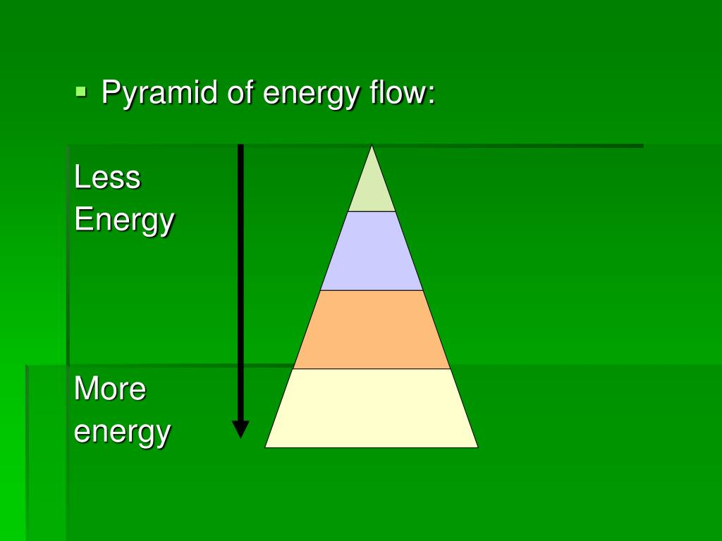 Pyramid of energy flow: