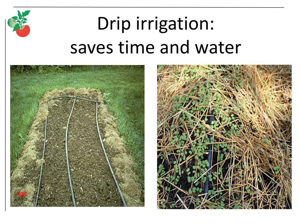 Drip irrigation: