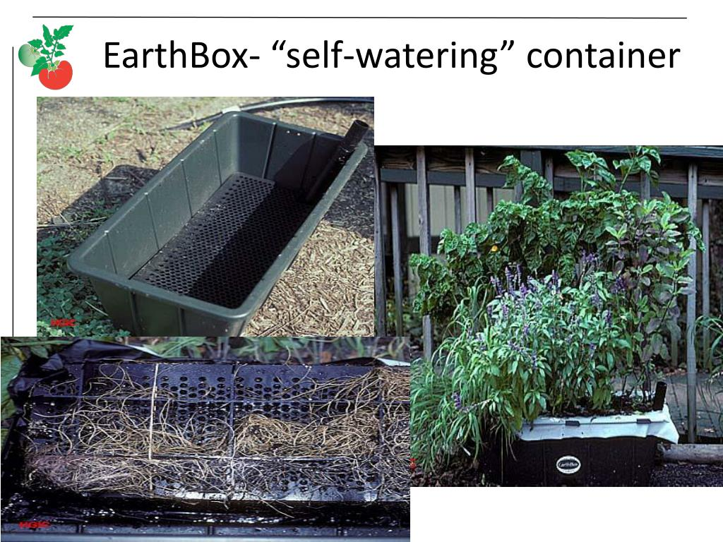 "EarthBox- ""self-watering"" container"