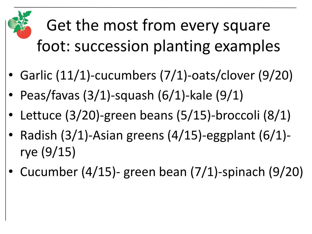 Get the most from every square foot: succession planting examples
