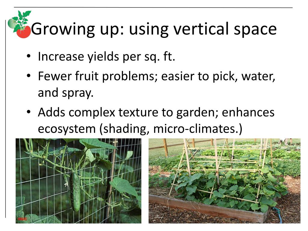 Growing up: using vertical space